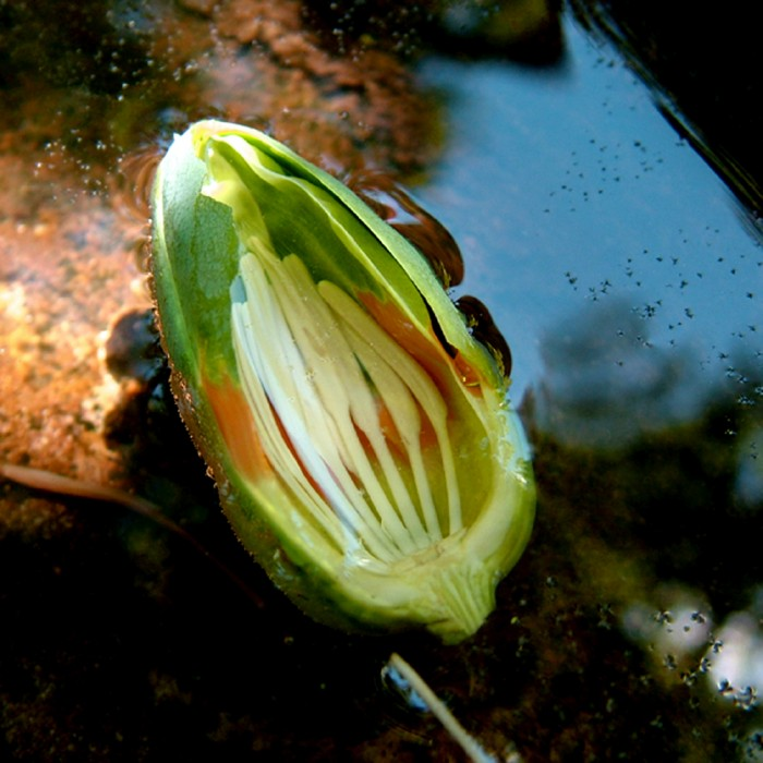 photoblog image Tales from My Garden: A Fallen Flower