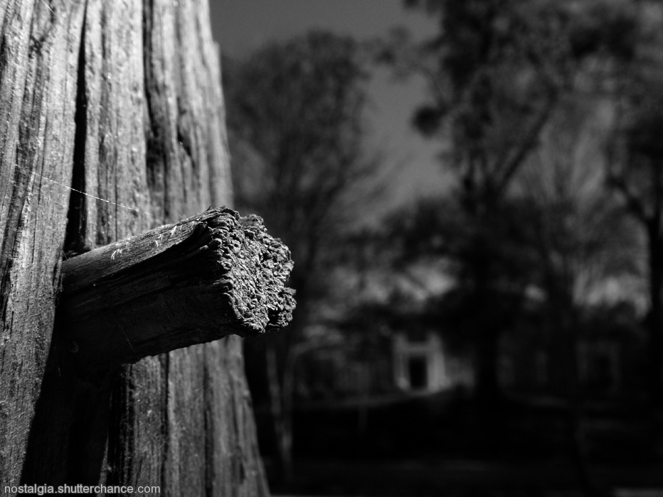 photoblog image The Other Side of Ansley Park:  Life As A Wood Peg