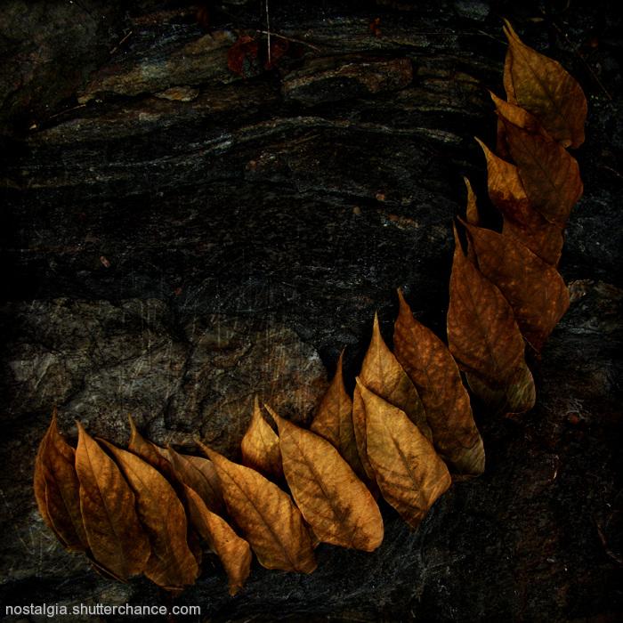 photoblog image Zyryality: In The Garden Of Life Passed