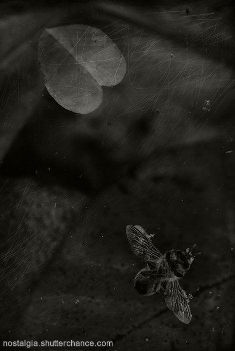 photoblog image In The Garden Of Nostalgia: Like The Miracle Of A Bee